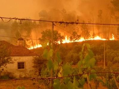 Количество погибших от лесных пожаров в Португалии достигло 62