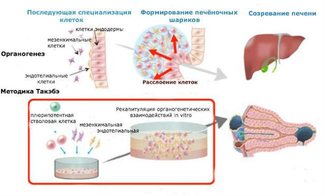Можно ли заразиться гепатитом с если ест