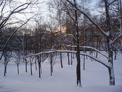 Заморозки в ночные и ранние утренние часы ожидаются в ЦФО уже в начале сентября