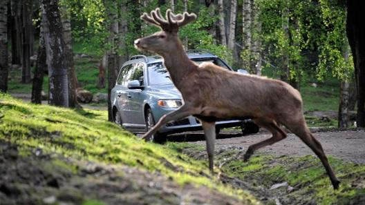Volvo учит автомобили уворачиваться от животных и грамотно стоять в пробках
