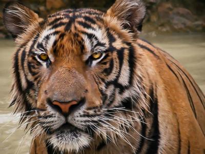 Малоимущих индийцев обвинили в скармливании родственников тиграм