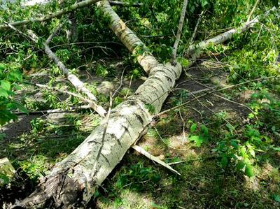 Поваленные деревья и сорванные балконы: по Одессе прошелся ураган