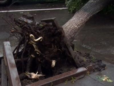 Ураган в Люберцах: повалена сотня деревьев, пострадали два человека