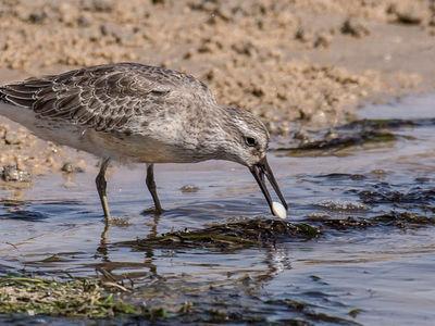 Потепление в Арктике вредит птицам в Африке