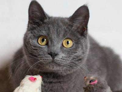 """Сотрудники музея Хемингуэя, отказавшиеся покидать здание из-за кошек, не пострадали от """"Ирмы"""""""