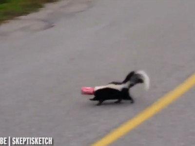 """Канадец спас скунса от банки """"Кока-колы"""" и назвал это своим самым смелым поступком. Видео"""