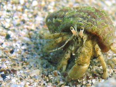 Новые жертвы загрязнения: микропластик обнаружен в организмах тысяч глубоководных существ
