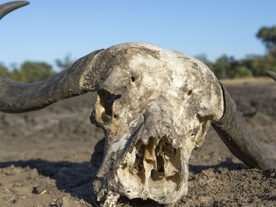 """Дикая природа в упадке: две трети """"свободных"""" животных планеты могут исчезнуть к 2020 году"""