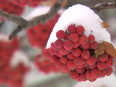 Снег в Москве выпадет через несколько дней