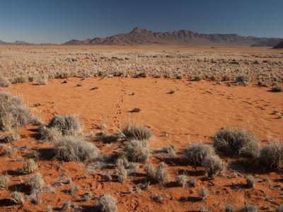 """Тайна появления """"ведьминых кругов"""" в пустыне Намиб раскрыта?"""