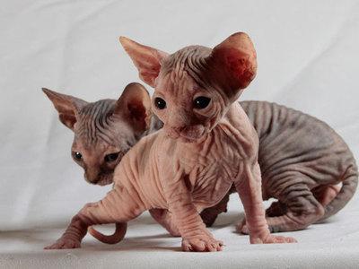 Кошки безвредны для психики