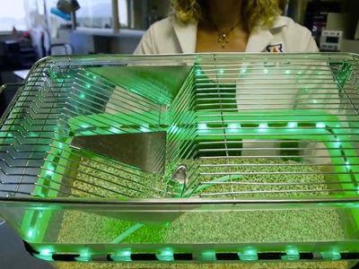 Зелёный свет облегчает хроническую боль не хуже лекарств