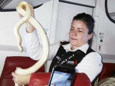 Потерявшуюся в самолете змею помогли найти пассажиры