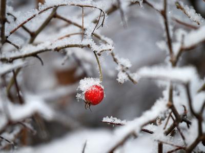 Первый день зимы: мокрый снег и сильный ветер