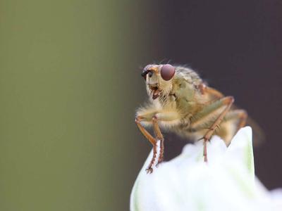 Учёные выяснили, каким образом естественный отбор удаляет вредные мутации из популяций