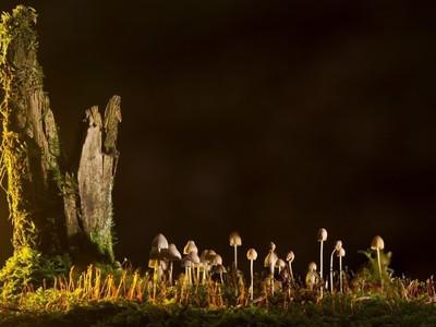 Древнейшими многоклеточными организмами на Земле могут оказаться грибы