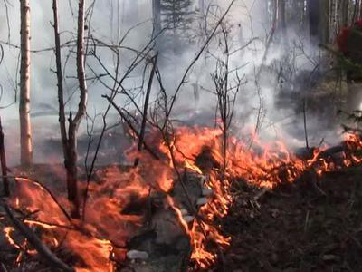 В Сибири 7 тысяч спасателей продолжают борьбу с лесными пожарами