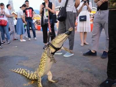 Китаец прогулялся по улице с крокодилом, а потом сделал из него шашлык