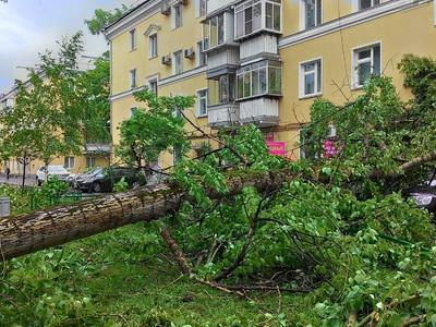 Собянин дал двое суток на ликвидацию последствий урагана