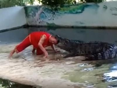 Крокодил укусил дрессировщика за голову на шоу в Таиланде. Видео