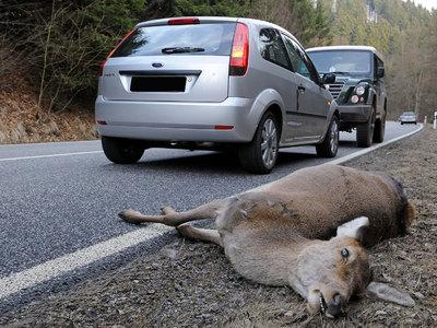 В США разрешили есть сбитых на дороге животных
