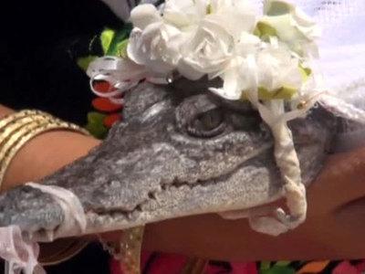 Мэр мексиканского города женился на крокодиле. Видео