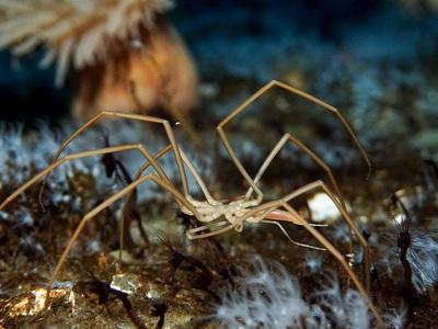 Биологи открыли пауков, перекачивающих кровь при помощи кишечника