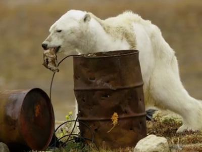 Медведь с атрофированными мышцами ужаснул Интернет