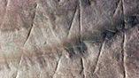 Внутри желобков в раковине остались 500-тысячелетние песчинки