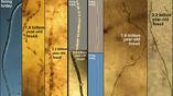 Сравнение современных и ископаемых серобактерий