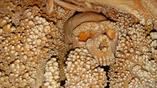 """Скелет мужчины был найден в 1993 году. Образования кальцита вокруг останков дали основания предположить, что этот """"двоюродный брат"""" человека жил 128-187 тысяч лет тому назад"""