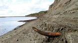 Останки одного из мамонтов были обнаружены на территории Сибири