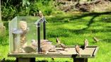 Лучшие места у кормушек, как правило, достаются агрессивным голубям и воробьям