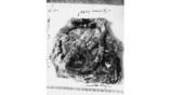 Антикитерский механизм. Самая крупная из сохранившихся деталей, фото 1902 года. Фото: The Albert Rehm Archives / Bavarian State Library