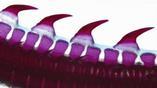 Дермальные зубчики на коже хрящевых рыб состоят из дентина, который также является основой зубов млекопитающих.