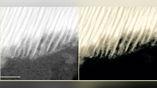 Микрофотография органического вкрапления в метеорите, полученная с помощью просвечивающего электронного микроскопа. Масштаб – 50 нанометров.