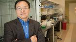 Ган Бао и его коллеги объединили наночастицы, магнитное поле и вирус, который заражает моль, чтобы создать новый способ адресной доставки генной терапии в организмы людей с генетическими заболеваниями.