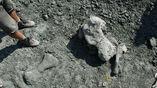 В течение 11 лет учёные обнарудили более тысячи костей древних существ.