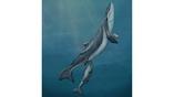 Самка и детёныш вида Maiabalaena nesbittae в представлении художника. Эти киты обитали на планете порядка 33 миллионов лет назад.