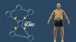 Как выяснили авторы новой работы, блокировка одного белка может помочь в борьбе с лишним весом.