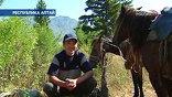 Местные жители зарабатывают на любопытных прокатом лошадей