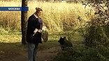 Сердобольные жители домов, стоящих вплотную к лесополосе, периодически подкармливают бездомных собак