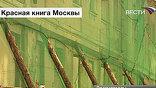 Особый знак тревоги – сетка, самый страшный цвет – зеленый, а в Москве эти сетки множатся, как паутина в подвале