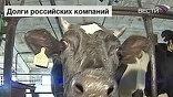 Эти коровы и свиньи были колхозными, а стали банковскими. Ферма ушла кредитору за долги