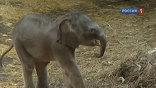 Ростовский зоопарк намерен провести конкурс на лучшее имя для нового обитателя