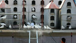 Китайский рабочий проводит дезинфекцию голубятни, опасаясь гибели птицы от нового вируса гриппа