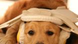 Собака во время магнитно-резонансного сканирования