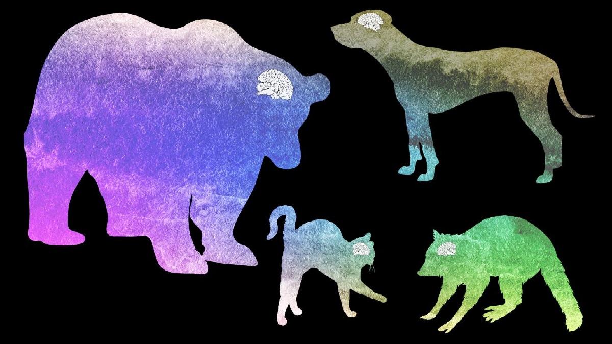 Кошки против собак: ученые узнали , кто благоразумнее