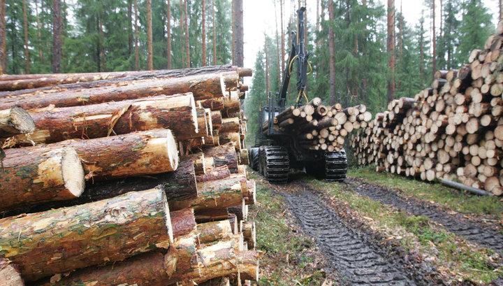 Дрова из леса: валежник стал недревесным ресурсом