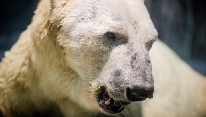 Жителям Чукотки могут вернуть право на добычу белого медведя
